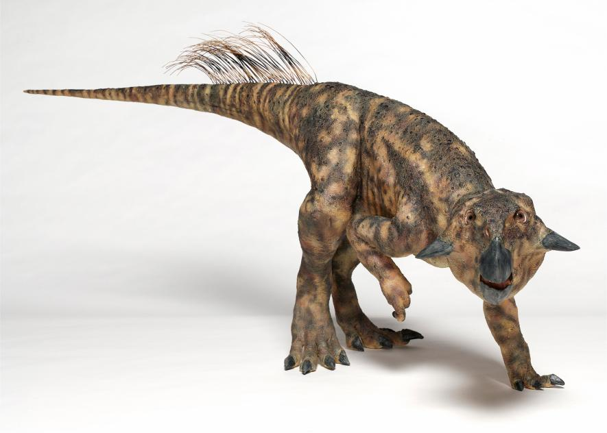 Dinozor - 004