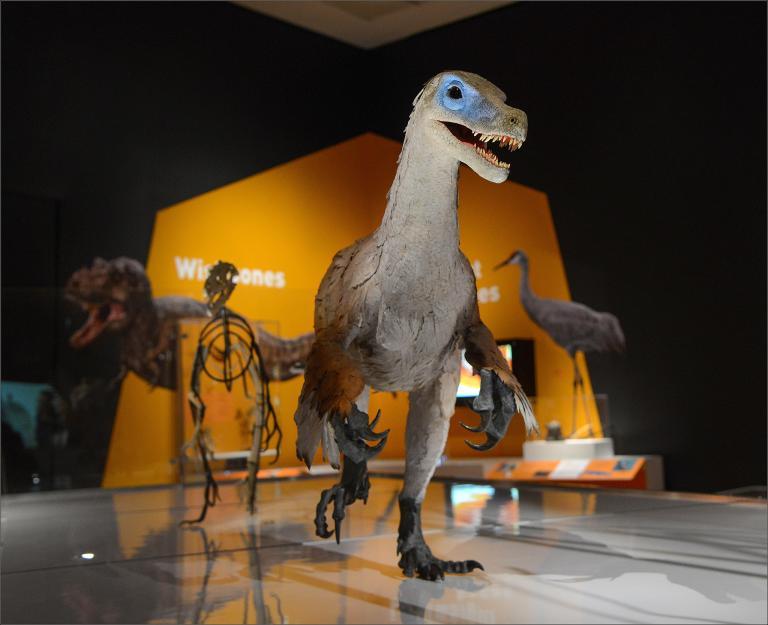 Dinozor - 005